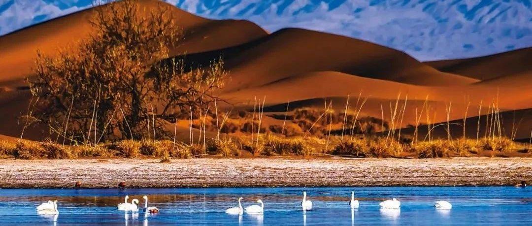 阿拉善:�v格里沙漠深�的冬之交�