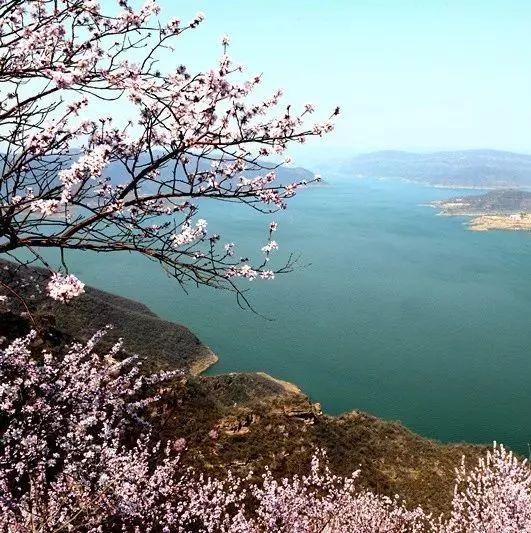 荆紫桃花始盛开免票游览等您来