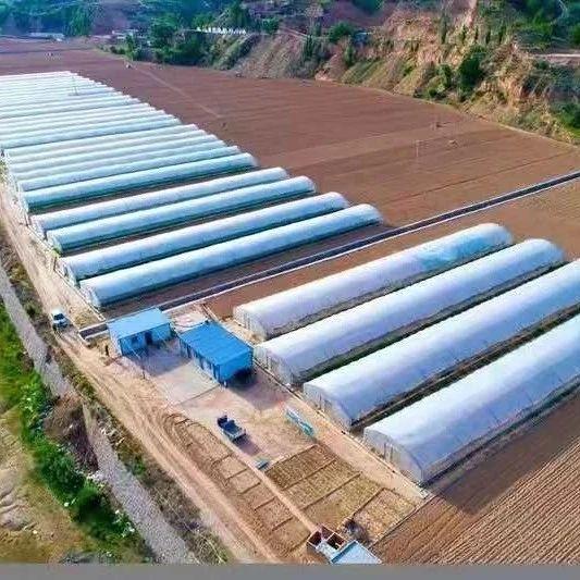 府谷发布农业产业奖补办法,涉及蔬菜大棚、果园、中药材、养殖等项目