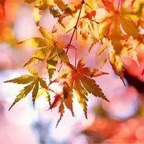 秋季�砹耍�空�{需要注意什么?
