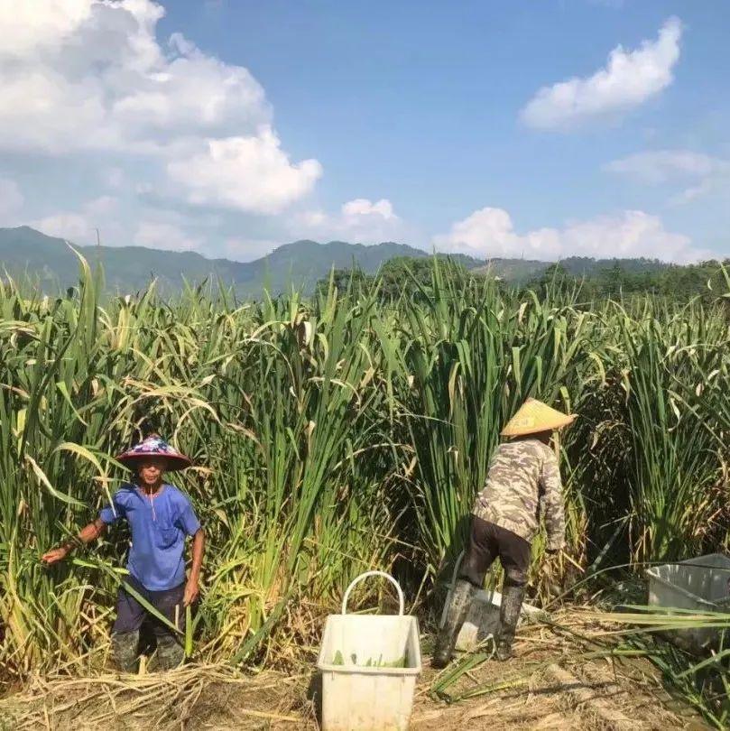 家丰智富农场:国庆假日忙生产信心满满谋发展