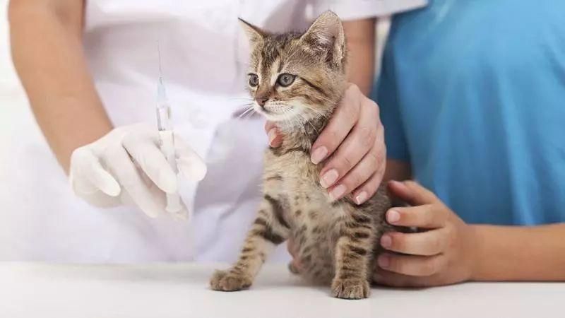 大港有2家宠物打疫苗指定机构
