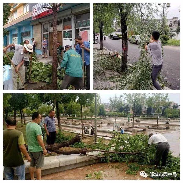 暴雨袭城,邹城园林局迅速处置绿化险情