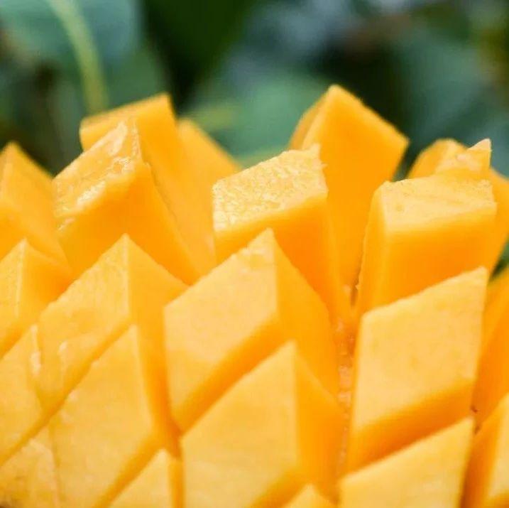 """芒果中的""""玛莎拉蒂"""",比脸还大的攀枝花芒果,现在吃正好......"""