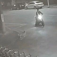 醉汉与狗对骂,半小时后狗子终于认输了…