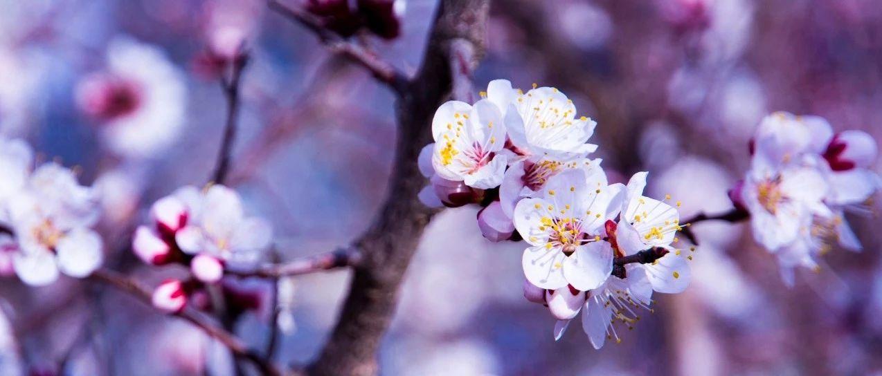 12首诗12幅书法,12首曲12种花,美极了!