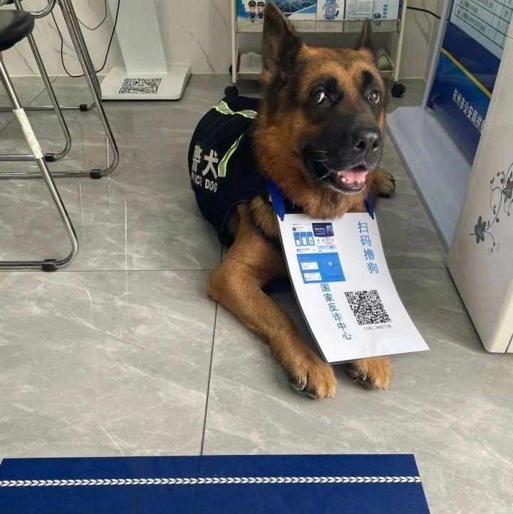 扫码就可撸狗!为了推广反诈APP,杭州这家派出所把警犬都搬来了!