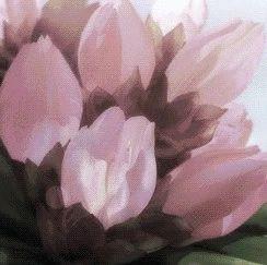 在送彩金的娱乐平台大全春游赏花,看这一篇就够了!