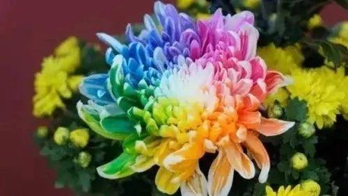 全世界最美菊花,终于找齐了,太美太珍∩贵了!