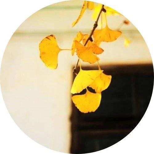 一声祝福,温暖深秋!
