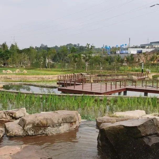 """从黑水沟到湿地公园!内江这条河现在成了市民""""打卡地"""""""