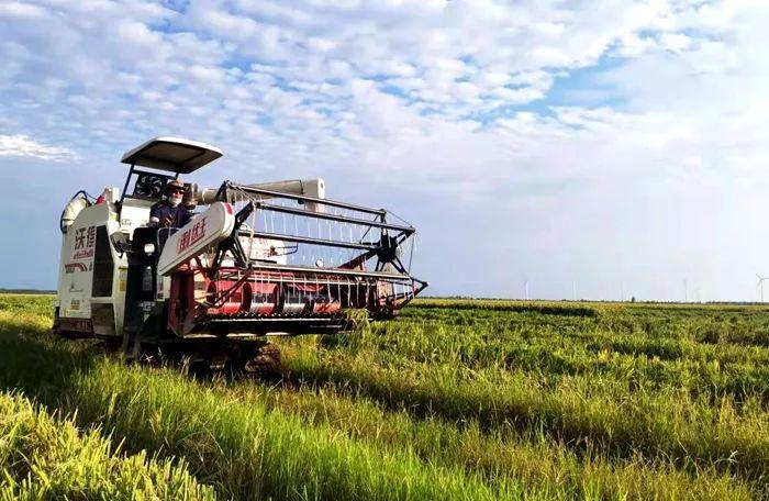 望江县57万亩水稻陆续进入收获期