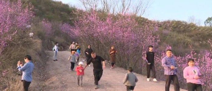 """丽水要建""""紫荆花小镇""""主题公园了,位置在哪?"""