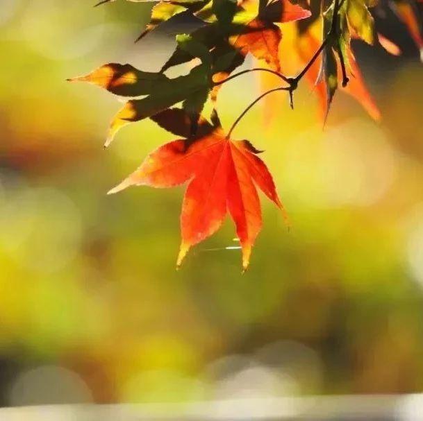 【美文共享】秋颜褪尽秋意去,秋去冬来日渐寒