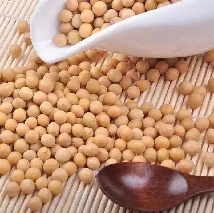 美国大豆还没进来东北国产大豆收购价格却已经开始下跌了