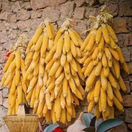 玉米价格现在一直上涨,12月份会降吗?
