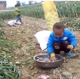 杞县蒜农感叹种蒜难!