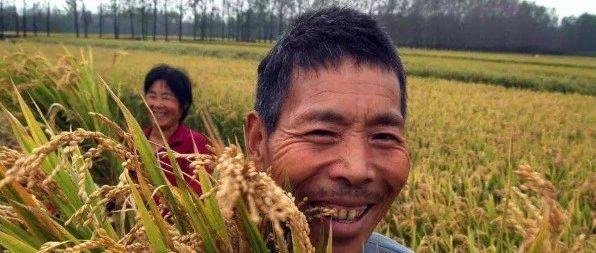 """2020新政策出台,""""2涨1降""""落实,农民迎3大好消息?辛集人期待不?"""