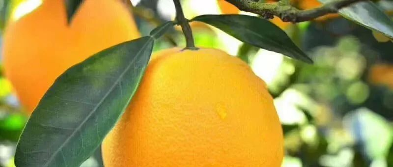 """于都良""""橙""""美景等你来……"""