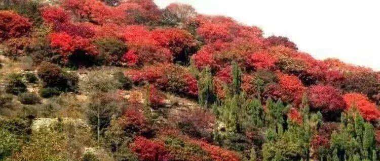 【乡村游】魅力石板河,金秋红叶美出了天际
