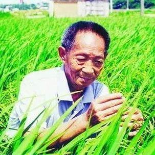 """""""杂交水稻之父""""袁隆平:稻田里的拓荒者!~"""