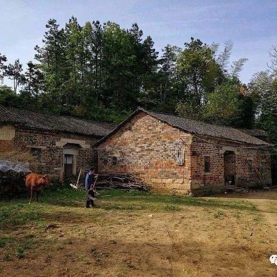 望江农村也有这种树,有人一年赚800多万元!