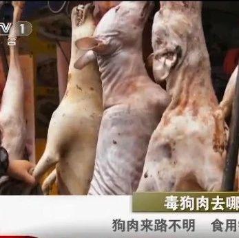 注意!全国或将要禁食狗肉啦?!