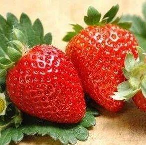 你会选草莓吗?四招教你选到这个春天最甜的草莓