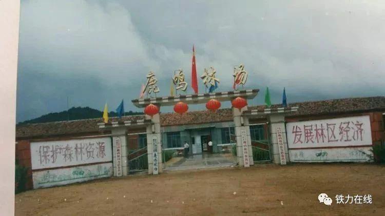 让历史告诉未来!共产党领导的第一个国有森工企业一铁力林业局!它比中华人民共和国早诞生三年半!