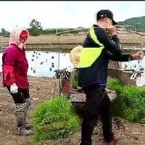 小满|中国稻乡生态五常