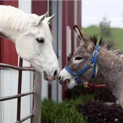 一头驴和一匹马的故事,脸都笑抽筋了