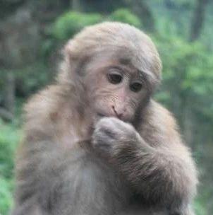 一只老猴子说的话,太经典了!