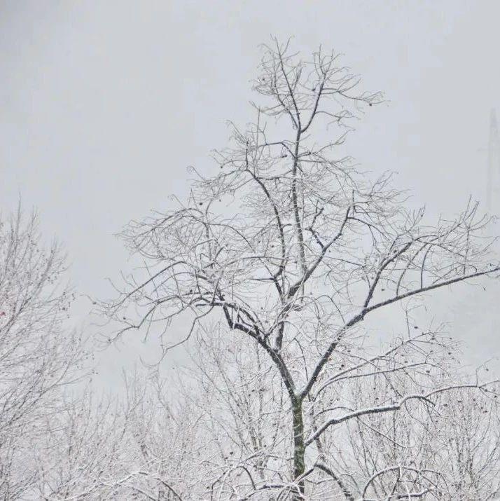 -5℃+雨雪+大�L……最��寒潮要�硐��了!