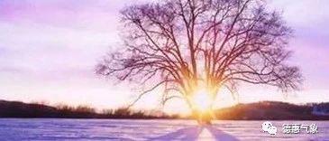 冬季恍如春雪花何时飘