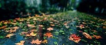 秋阴不散霜飞晚留得枯荷听雨声