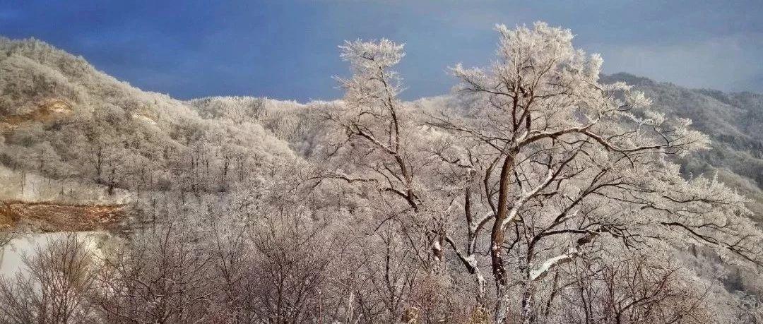 今天,六安真的下雪了!新鲜雪景抢先看!
