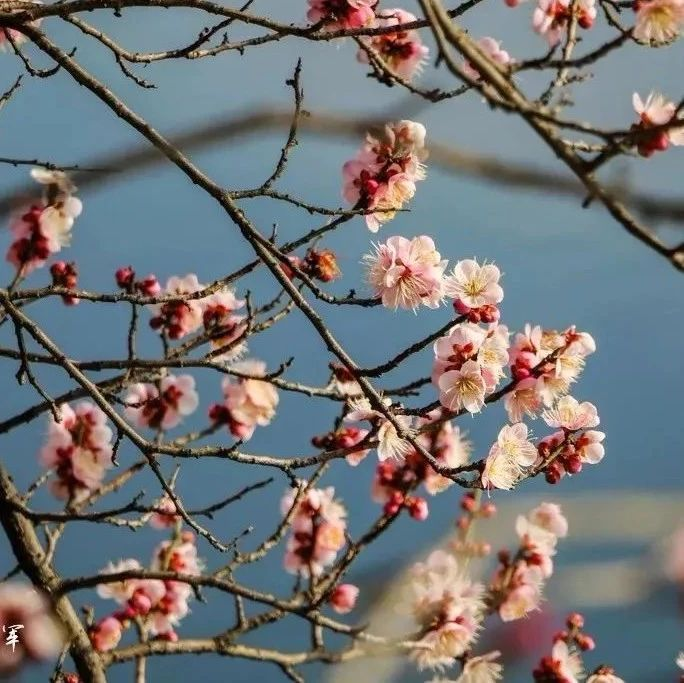 金寨之春已悄然上�,一起���^�@朵朵花�_!
