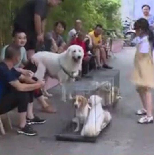 """人民医院附近人行道一到周末就成""""宠物市场,严重影响市容市貌!"""