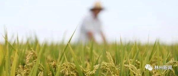 十大优势特色农业基地出炉,澳门银河注册榜上有名!