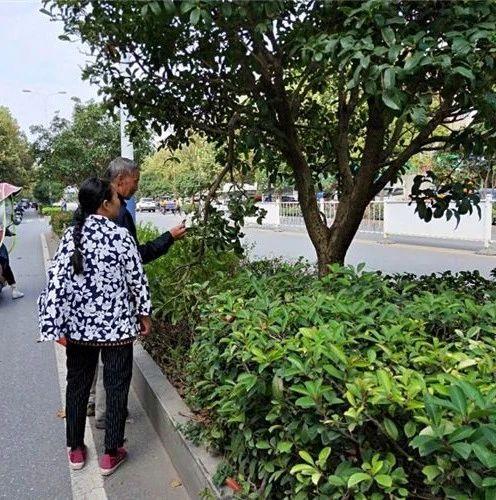 气愤!武穴永宁大道东段大路两旁的景观花木惨遭毒手……