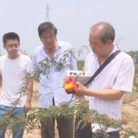 富平人乔宏岳研制成功4CD-5花椒电动采摘机并获得国家专利