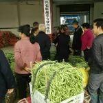 厉害啦!甘霖镇的蔬菜外销外销北京、上海和东北三省