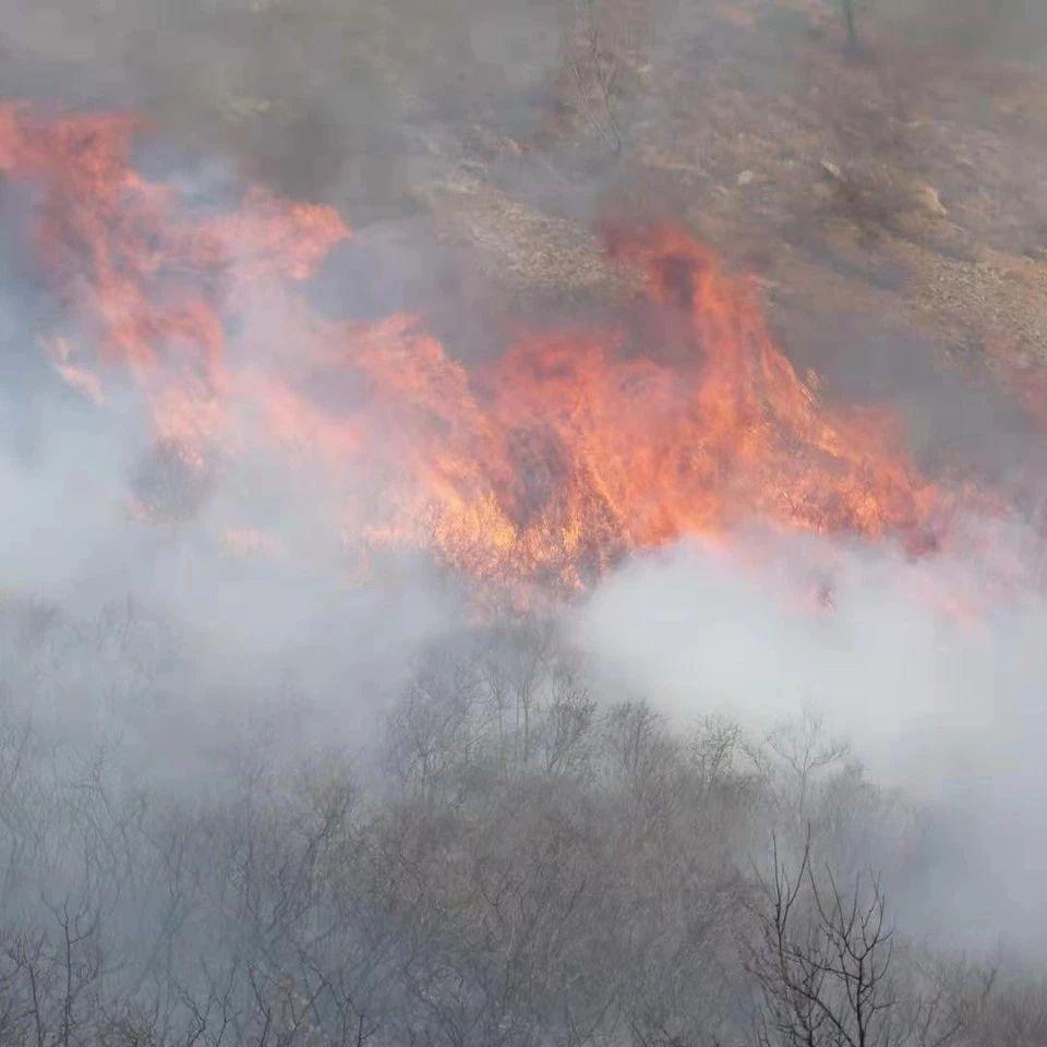��x市森林防火宣�骶�示片