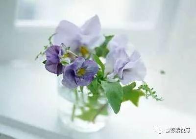 完美的家,紫��府花��睃c�Y