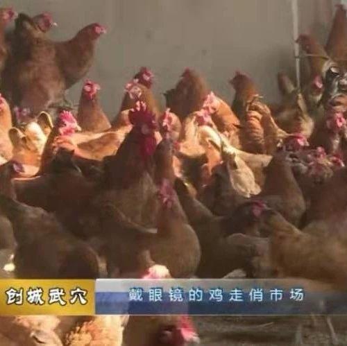 余川九龙山庄戴眼镜的鸡走俏市场