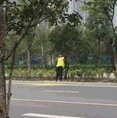六安这个女子摇挂花树遭曝光,被罚款,你怎么看?