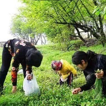 汝州人谨记!春天的野菜有很多,但一定不能乱吃!