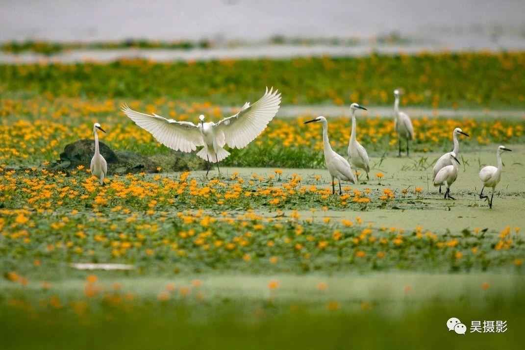 天津鸟类摄影大赛拟获奖作品公示