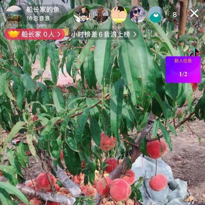 """【烟台日报】莱阳市万第镇南于格庄村:直播销售让农产品变身""""网红"""""""