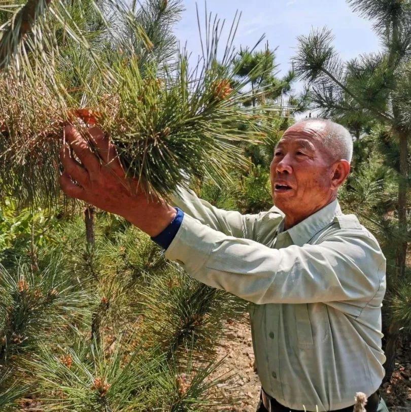 莱阳市白藤口村老党员刘元生18年带头造林3600亩,让荒山变绿洲